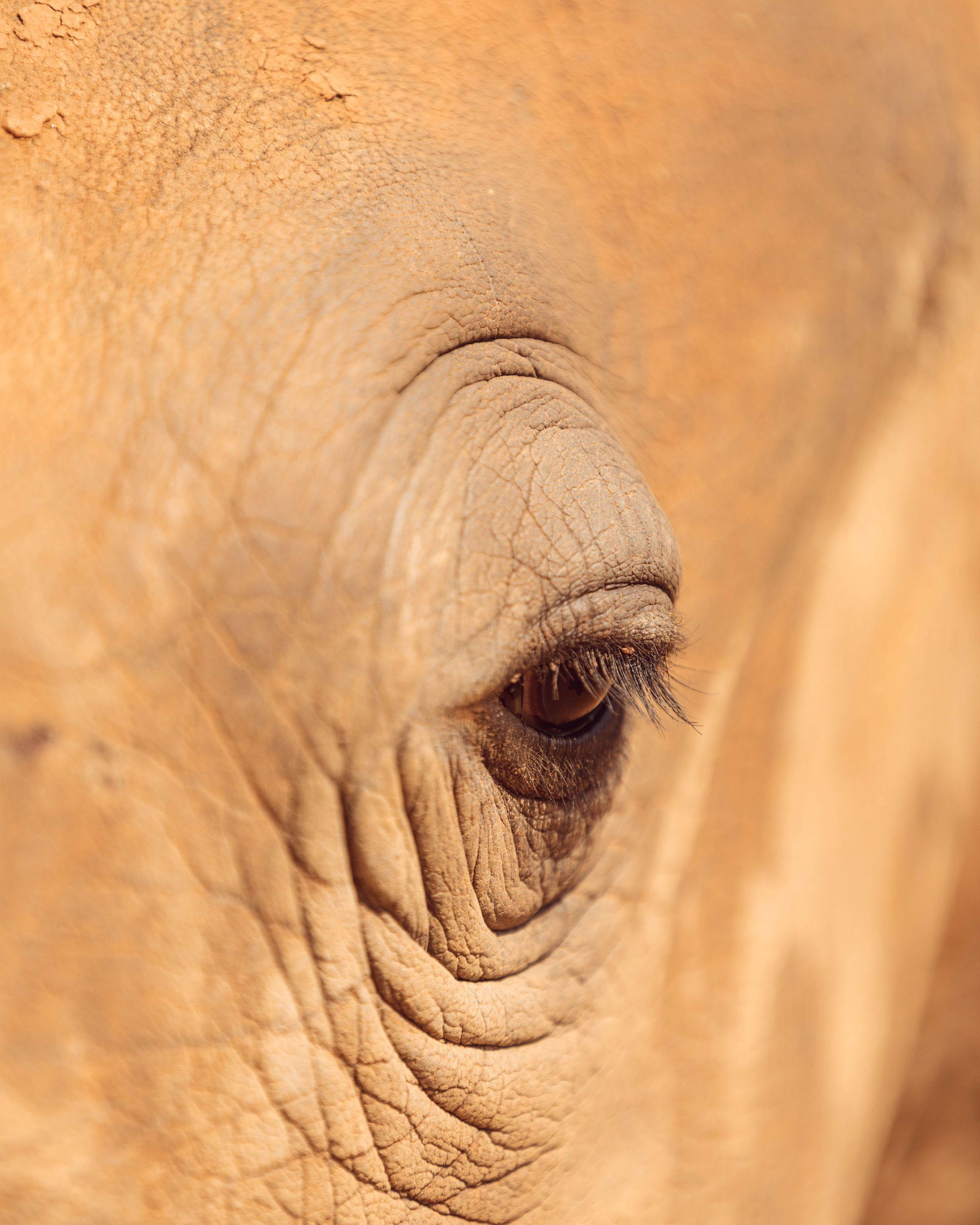Rhino - Hublot's maiden with Kevin Pietersen in India